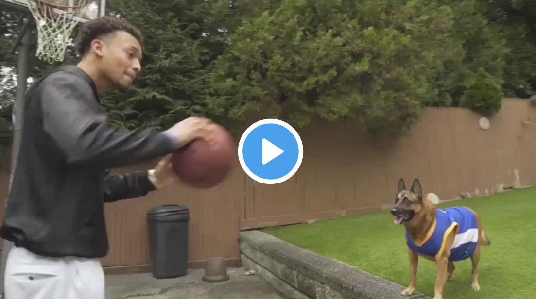 VIDEO // Watch Dog Give the Perfect Alley-Oop Pass
